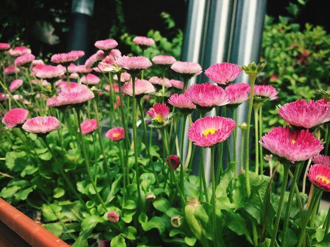 Flower Daydreaming Walking Around