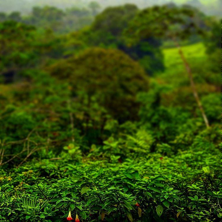 Reina de la Noche 😍 Costarica Jetsetter Gothere Eye4photography  Anastasiasadvantures EyeEm Nature Lover Travelblog Vibrant Colors Nature Nature Photography
