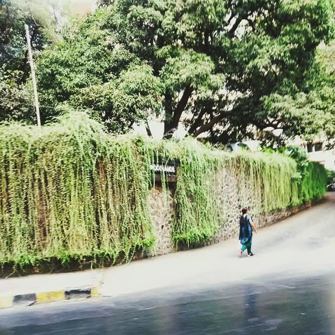 tree, full length, growth, rear view, real people, one person, day, outdoors, nature, road, beauty in nature, people
