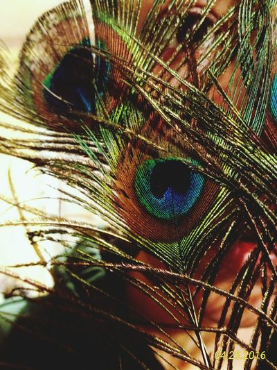 Say Hello To Eyeem Feather  Peacock ArtWork Colours Beautiful Eye4photography  EyeEm Best Shots EyeEm Gallery Hidden Face Fineart