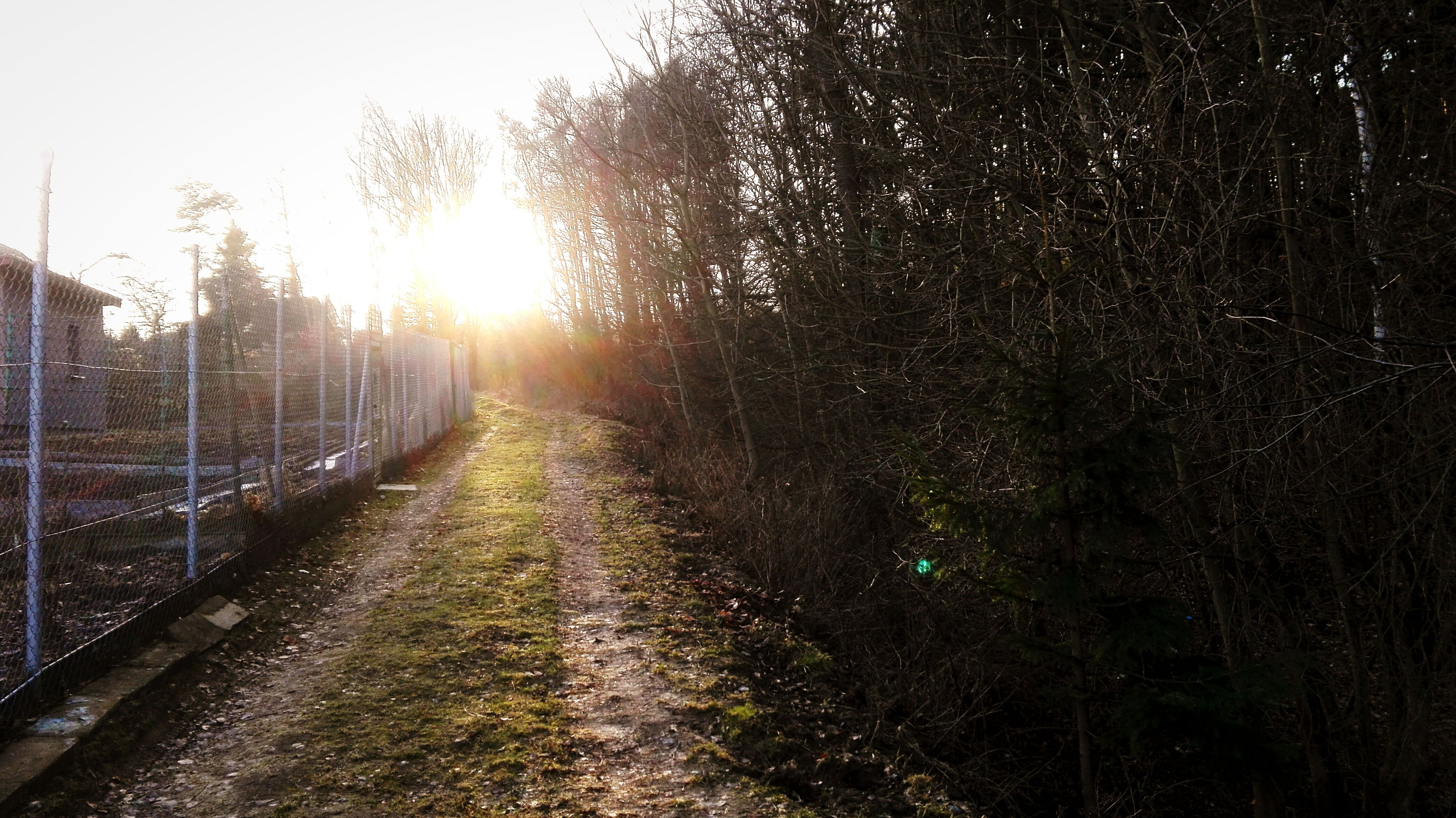 the way forward, diminishing perspective, vanishing point, sun, tree, tranquility, road, transportation, nature, sunlight, tranquil scene, sunbeam, lens flare, dirt road, beauty in nature, clear sky, empty road, sunset, scenics, country road