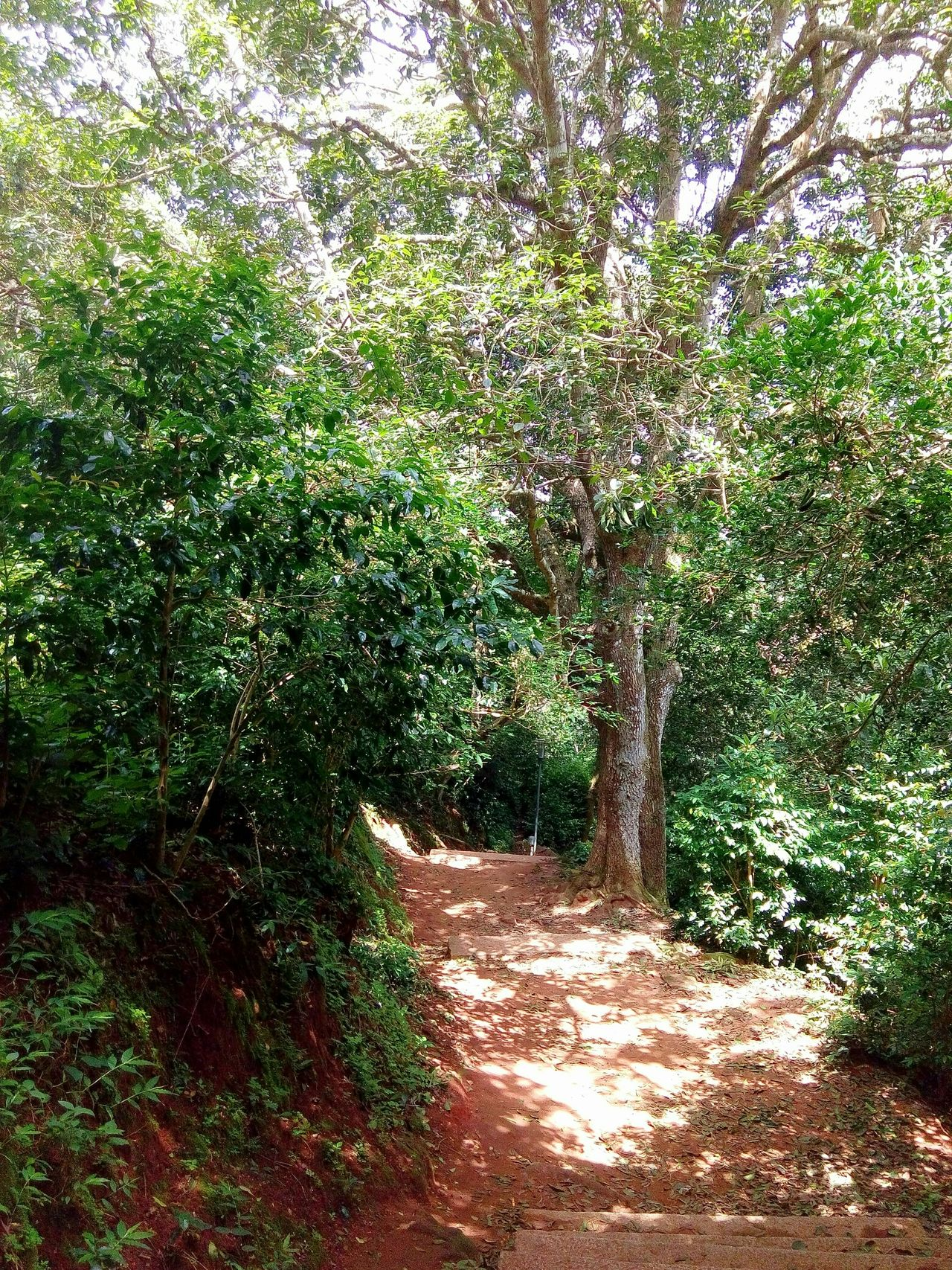 Welcome To The Jungle Tree_collection  Pathway Green Leaves Nature Photography Beautiful Nature