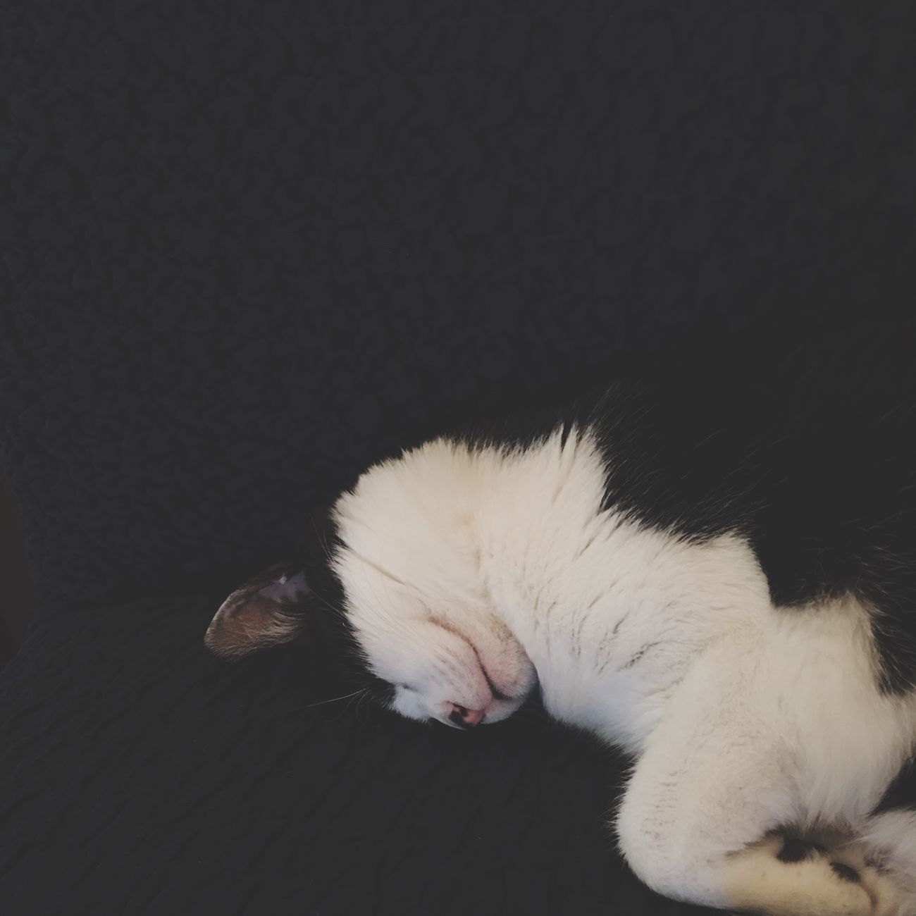 おやすみ 雨ちゃん