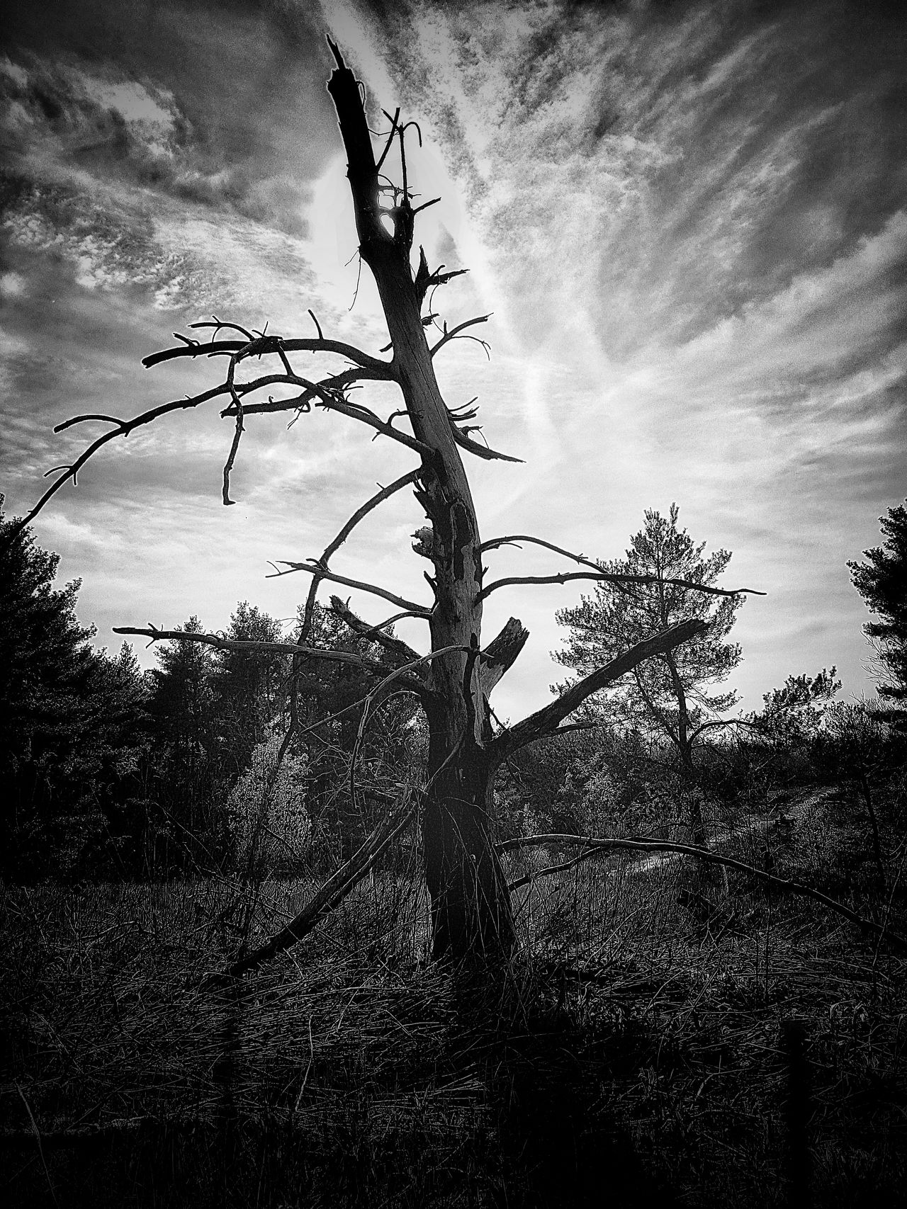 Tree Growth Sky Low Angle View Silhouette Nature Outdoors No People Day Beauty In Nature Close-up Blackandwhite