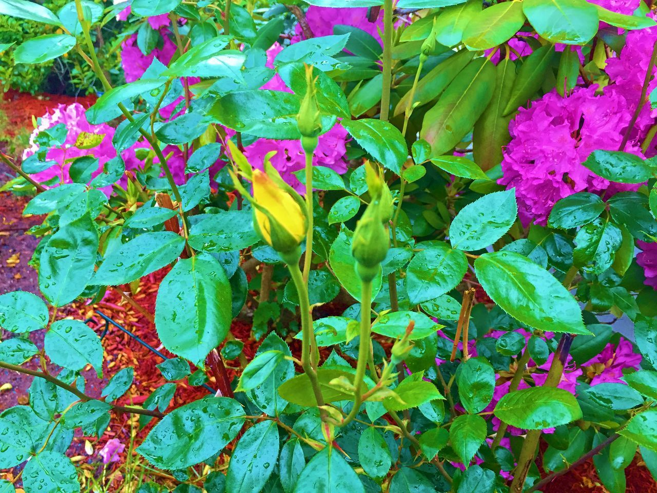 Day Flower Full Frame Green Color Growth Leaf Nature No People Plant