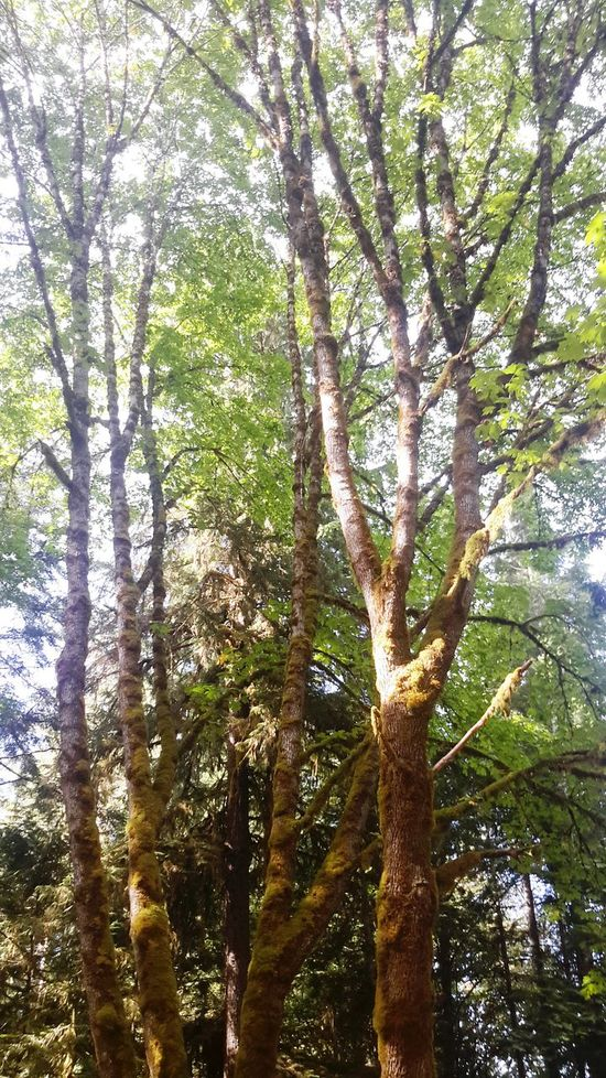 Getting In Touch Soaking Up The Sun Escaping Hugging A Tree Port Alberni Parks Vancouverisland Britishcolumbia Beautifulbc