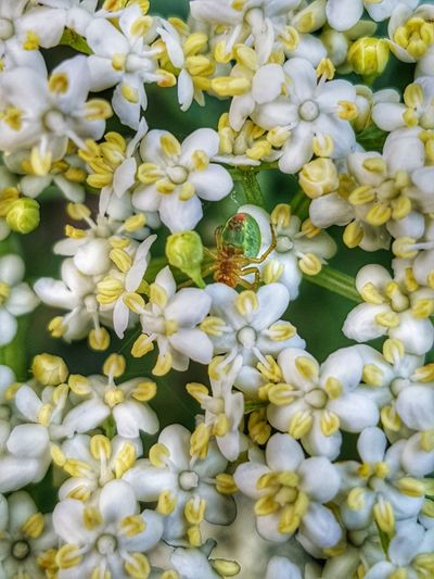 Insect Spider Flower Nature Beauty In Nature Full Frame Growth Plant Freshness Petal Outdoors Fragility Day No People Backgrounds Close-up Springtime Flower Head Beauty