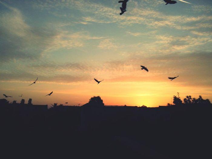 Sunshine Morning Birds Clouds