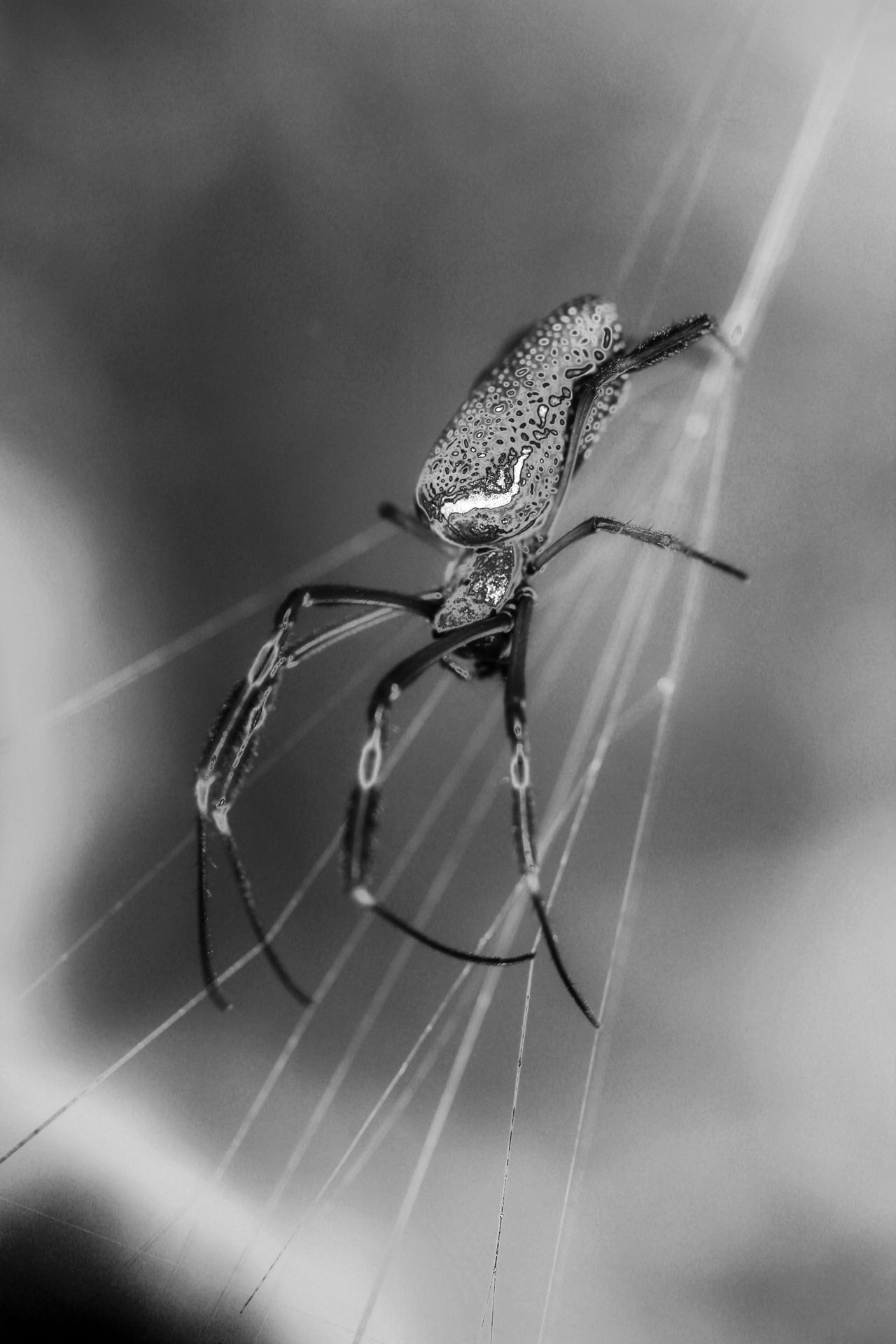 Welcome To Black Spider Animal Themes Black & White Black And White Photography Blackandwhitephotography Curves Of Nature Animals In The Wild Close-up My Edit My Style Shadows And Silhouettes Animal Wildlife My Dramatic Look