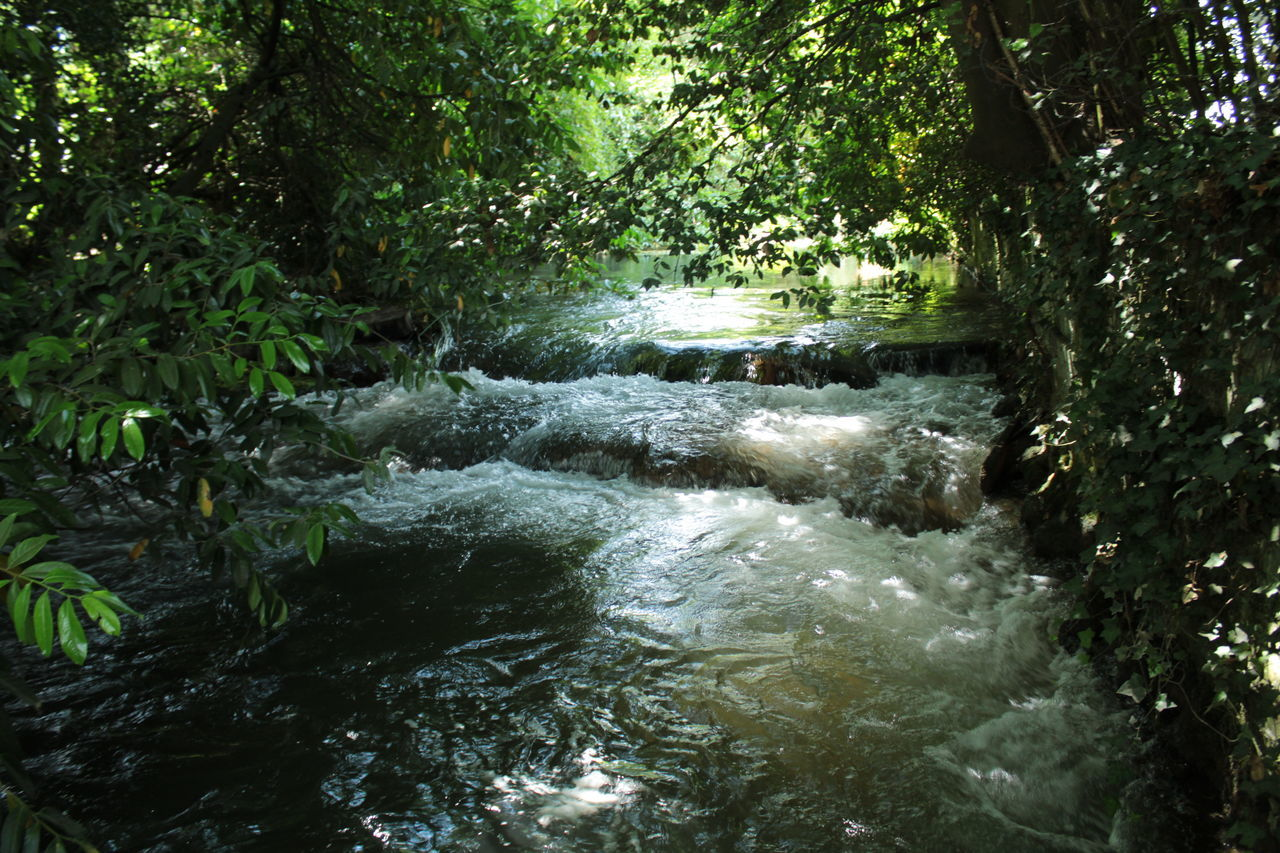 Water Stream Amidst Trees In Forest