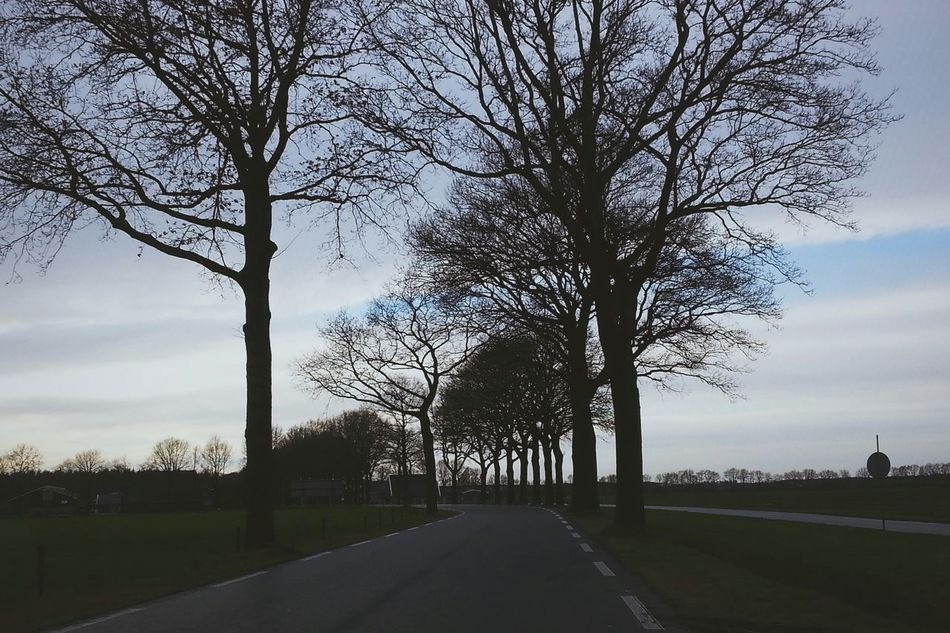 On The Road Road Street Trees Tree From A Moving Vehicle Nature Streetphotography Streetphoto_color Taking Photos Winter Afternoon Outdoors Mobilephotography VSCO Ladyphotographerofthemonth Landscape Outdoor Traveling Travel