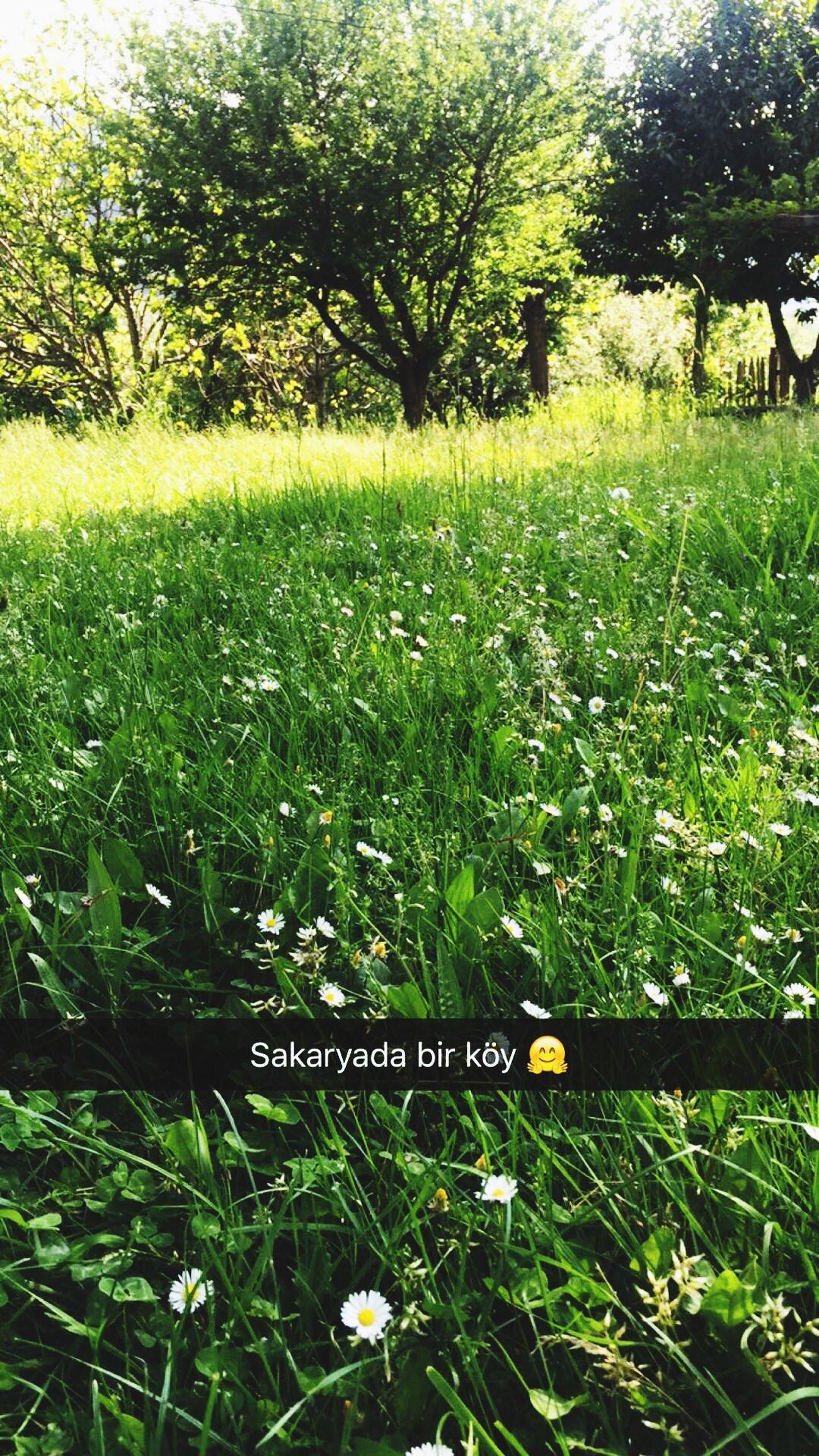 Sakarya Köy Köyhavası Ohmisss