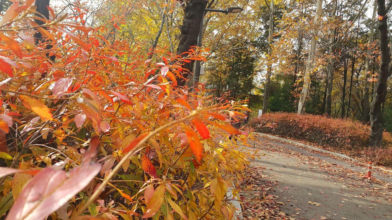 Atumn Atumn Colors Atumn Is Here ... Fall Mood! Atumn Leaves Love Atumn