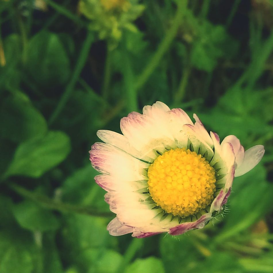 Pastel Power 🌸💮🌺🌻🌼 EyeEm Worthy Book Art Shades Of Nature EyeEm Gallery Eye4photography  Getty Images EyeEm Best Shots - Nature Picturesque Book Cover Eyeem Market Shades Of Pink Soft Pastel  EyeEm Flower EyeEm Flowers Collection Clover Flower Bee Flower