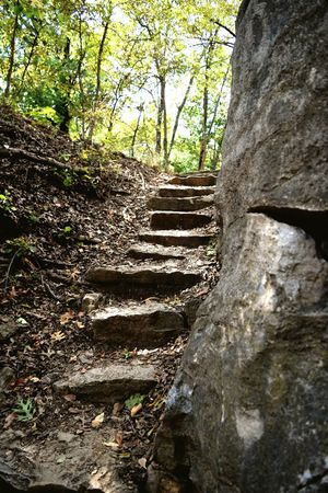 Forest Tree Trunk Tree Steps Destruction Narrow Old Moss Damaged Bad Condition Tranquil Scene Nature The Way Forward Tranquility Long Branch Deterioration Footpath Outdoors Messy