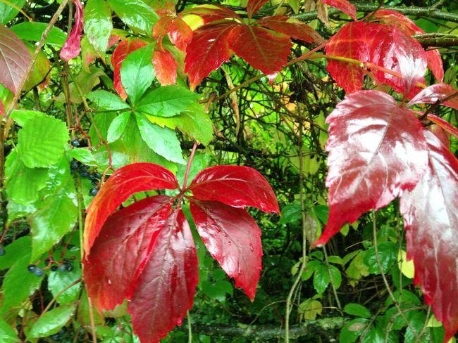 Herbstlich färbet sich die Welt.
