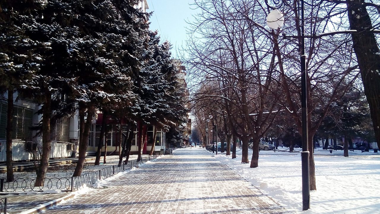 Tree Cold Temperature Nature Outdoors Sky Day No People Branch Snow Beauty In Nature Nature OpenEdit Hola! Open Edit Place Where I Live Привет всем! Hello World Rostov-on-Don Rostov-PAPA Street Photography Привет всем Walking Streetphotography Street Beauty In Nature