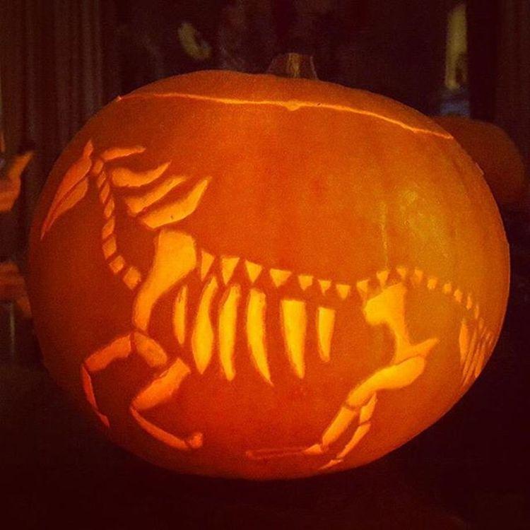 Happy Halloween everyone! Halloween Pumpkin Spoopy Horses horse skeleton gallop equine equestrian pumpkins pumpkincarving halloween2015