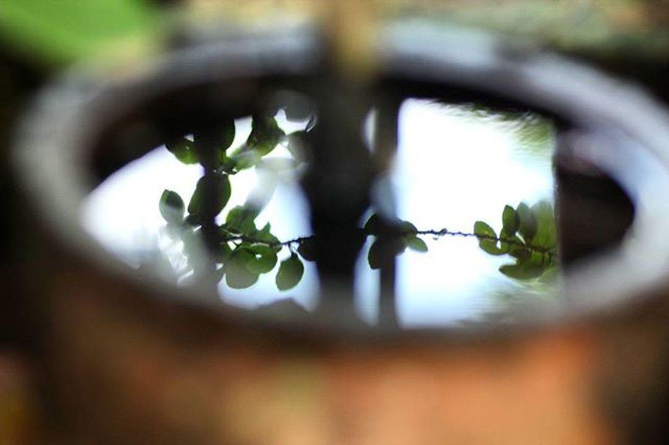 Reflection Water Macro Beauty Blue Sky TAMROM Crystal Reflections Green Stalk