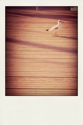birds at Vannes by Marie D.