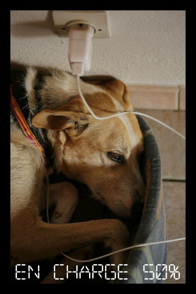Djazzy Chien Dog En Charge LOL