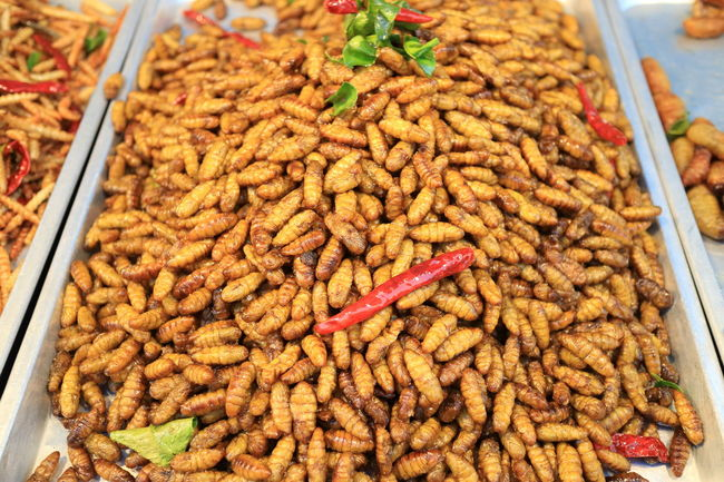 yummy fried insects (silk worms) on Ratchada Train Night Market in Bangkok Thailand Bangkok Chili  Food For Sale Freshness Fried Healthy Eating Heap Insects  Large Group Of Objects Meal No People Ratchada Ready-to-eat Despicable Or Mouth Watering Hate Or Love It Silk Worms Street Food Worldwide Tasty Traditional Food Traditionalfood Yummy