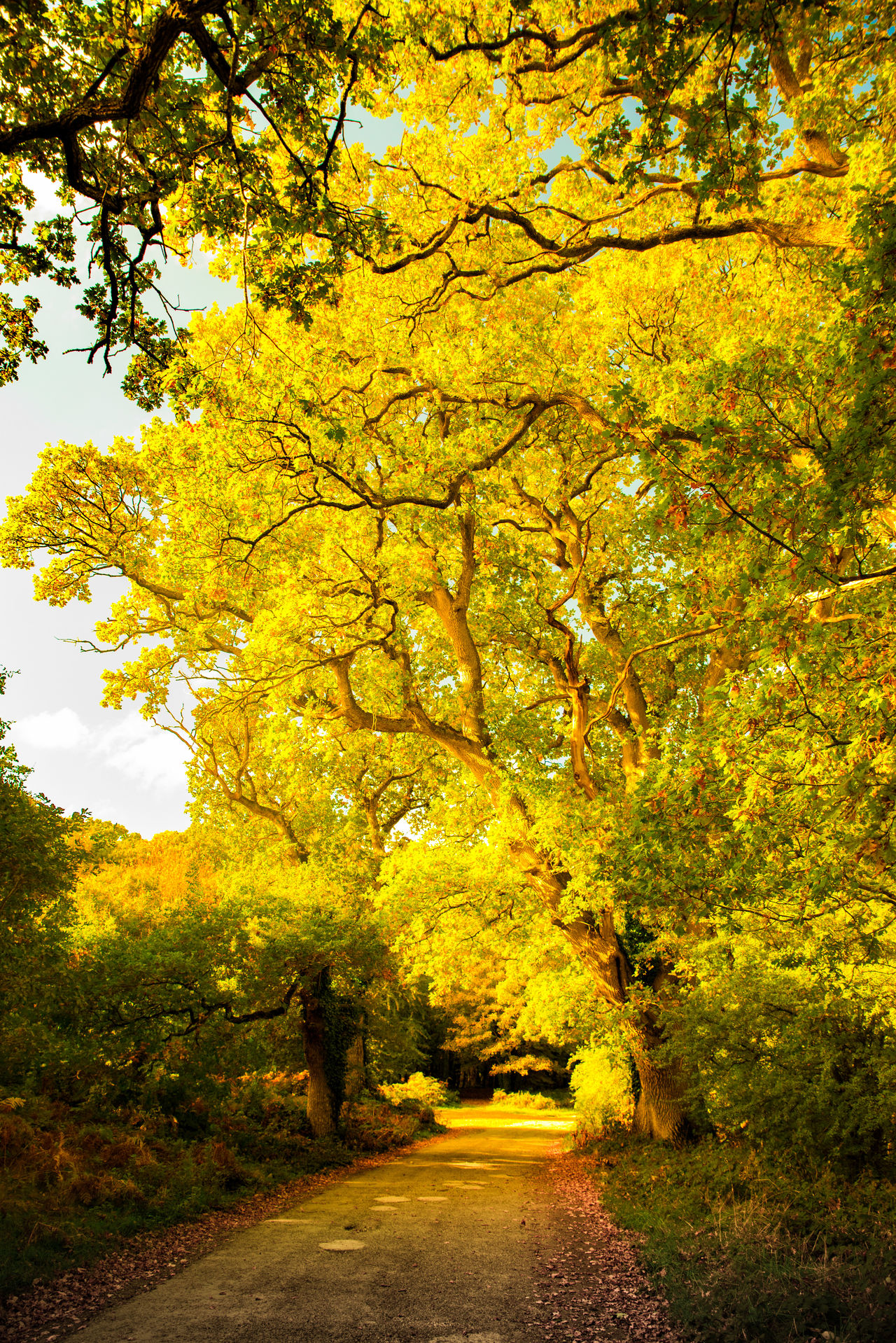 Capturing the beauty of fall at Charleville Forest, Tullamore, Ireland Autumn Autumn Colors Beauty In Nature Fall Nature Outdoors Tree Yellow