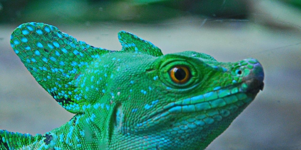 Animals Zoo Lizzard Lizard Check This Out Green