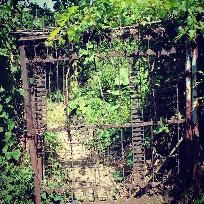 ... Kilit Kapı Yeşillik Bahce yolüstü