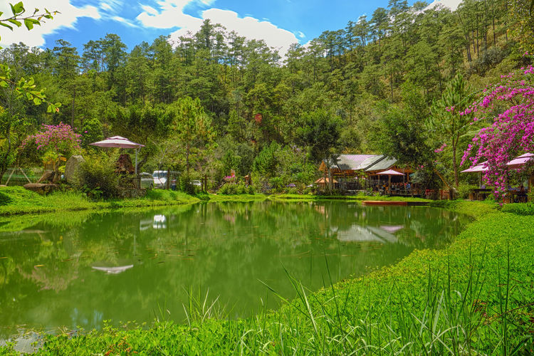 Reflection Lake Tree Water Outdoors Nature Green Color Beauty In Nature Scenics Growth Day No People Grass Sky