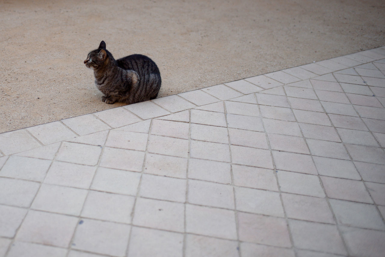 one animal, domestic cat, animal themes, pets, domestic animals, feline, mammal, sitting, no people, day, indoors, nature