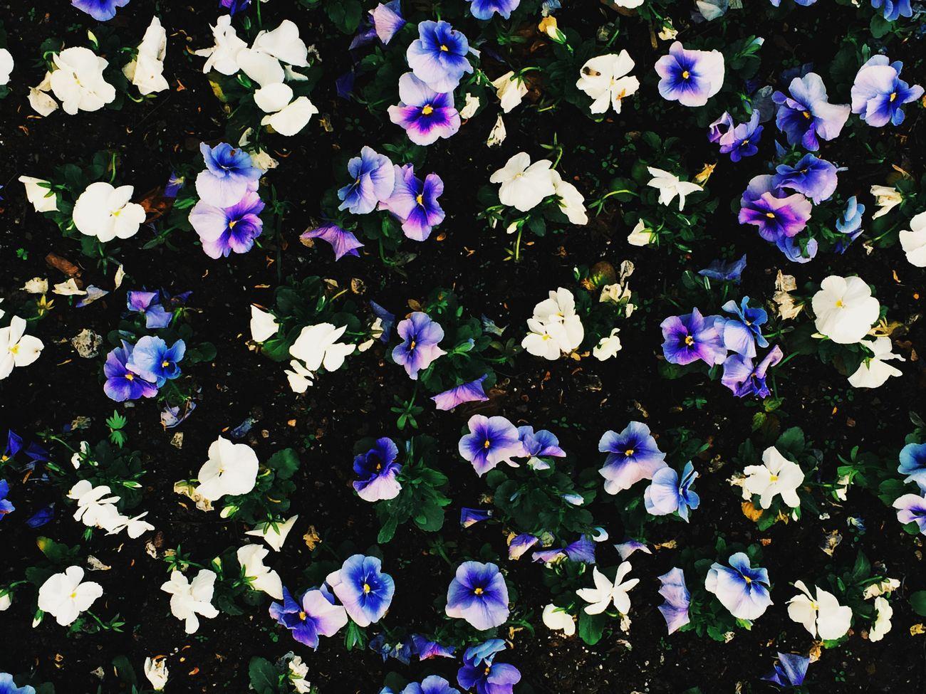 Flowers Garden Photography White Planting Gardening Colors Geometry Secret Garden Walking Details