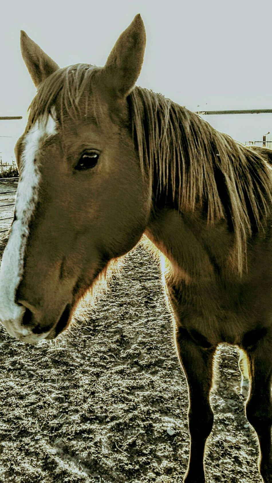 Ranch horses Animal Themes Domestic Animals One Animal Horse Animal Head  Close-up Mammal Livestock Day Working Animal Outdoors No People Nature Sky Silhouette Country Living Ranch Barn Ranch Life Farm Cowboy Country Life Mane Sunlight Stable