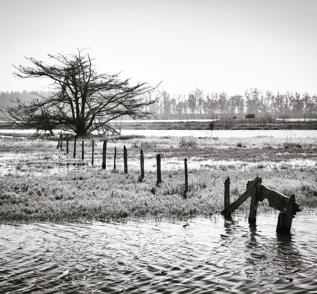 Tree Water Bare Tree Sky Day Tranquil Scene Outdoors Tranquility Nature Landscape Blackandwhite Subaru Crosstrek Monterey Bay Subaru Canon5D Canonphotography Canon Michellerobertsonphotography Beauty In Nature Fence