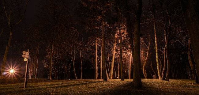 One night in park. Forest Tree Trunk Nature WoodLand Forest Photography Landscape_photography New Talent This Week Nature New Talents Welcomeweekly Outdoors Street Photography Nightphotography