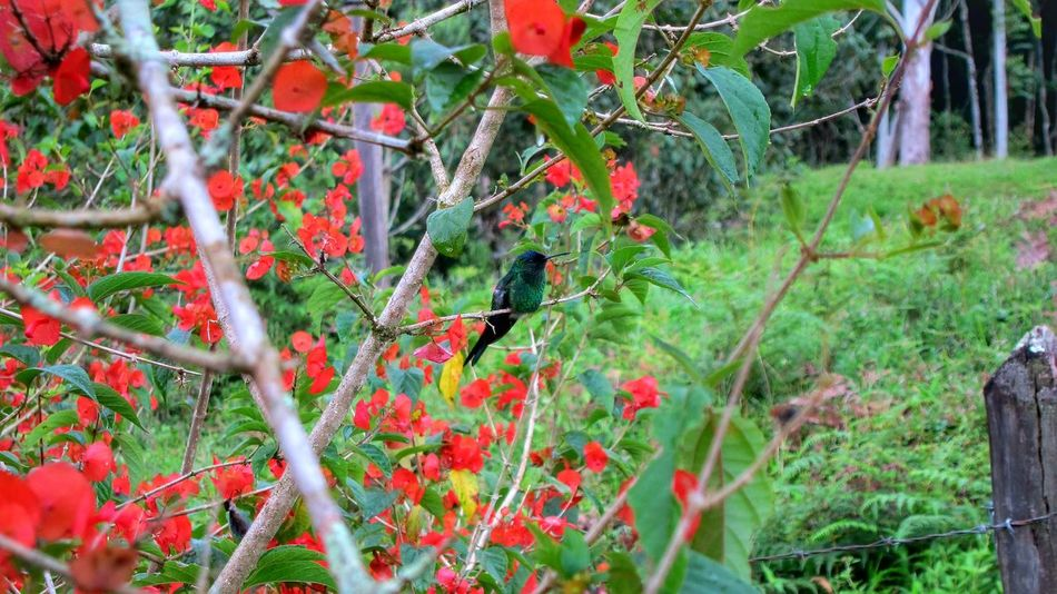 Growth Tree Nature Plant Red Beauty In Nature Freshness Outdoors Day Rowanberry Nature Beauty In Nature Multi Colored Colors Bird Photography Birds