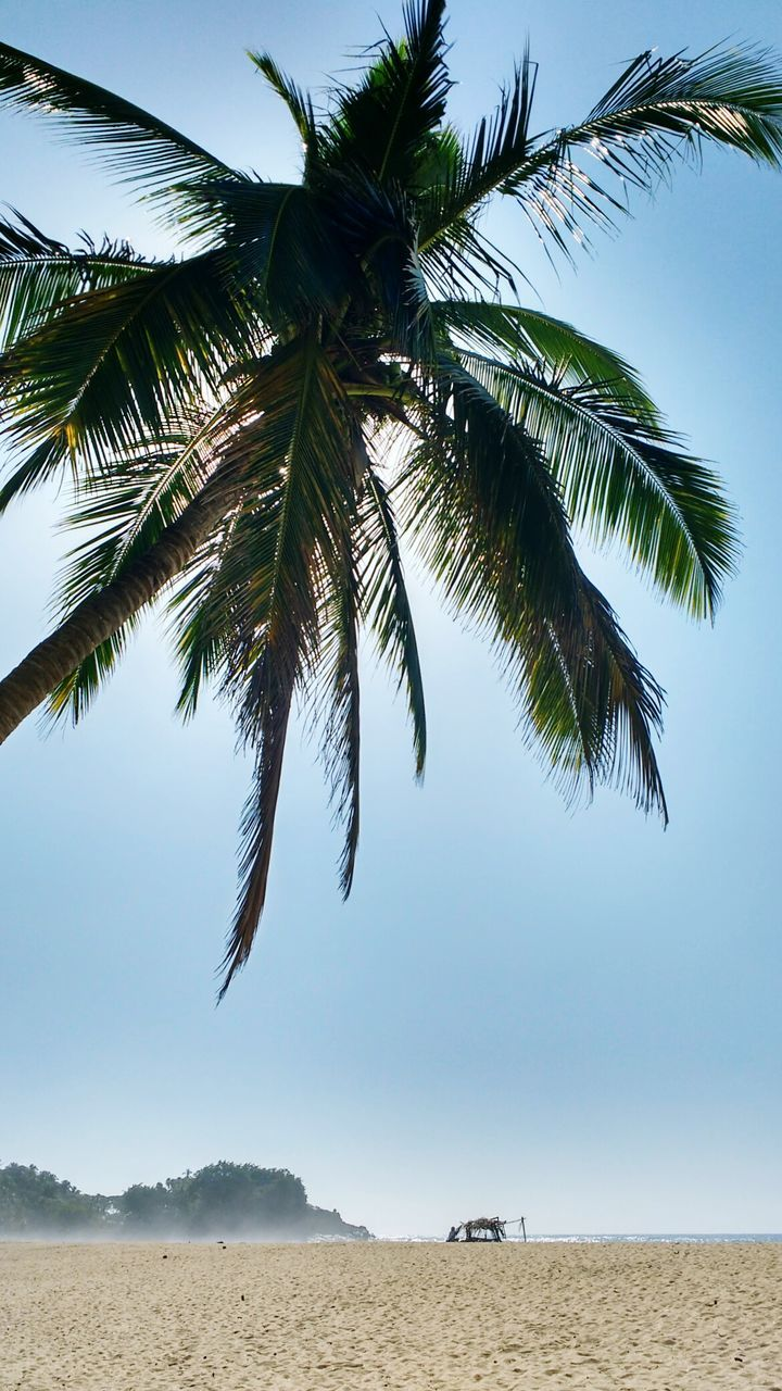 Low Angle View Of Palm Tree Growing At Beach Against Sky