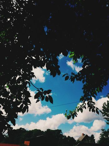 Tree Sky Nature Blue Silhouette Beauty In Nature No People