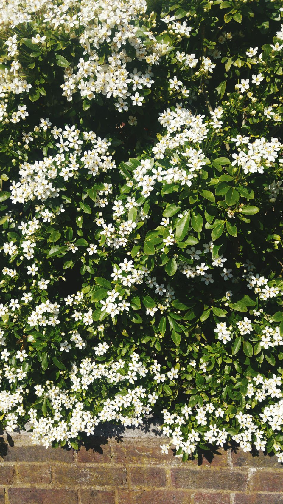 Nature Growth Flower No People Beauty In Nature Tree Green Color Plant Outdoors Day Close-up Fragility Freshness Flora Fauna White And Green Brick Work Spring Flowers Spring Photography