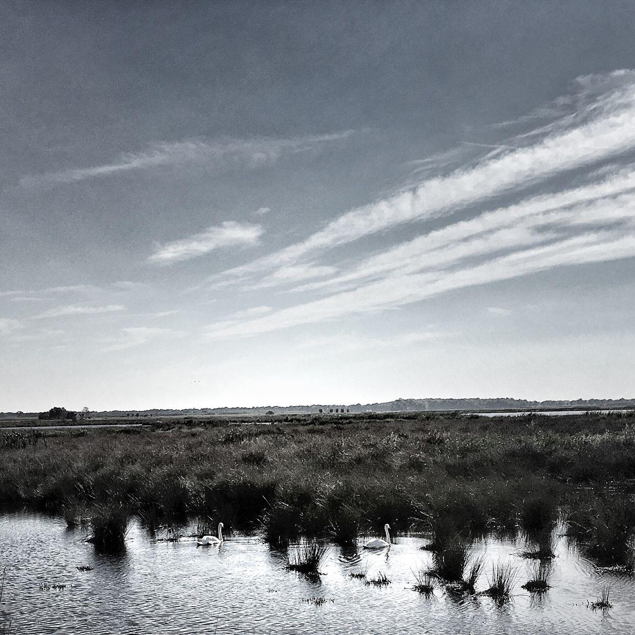 Dutch Landscape Blackandwhite Monochrome Blackandwhite Photography