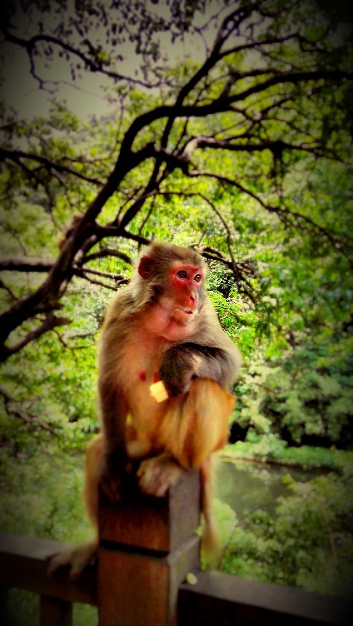 tree, animal themes, monkey, animals in the wild, one animal, no people, mammal, animal wildlife, nature, outdoors, day, low angle view, growth, branch, close-up