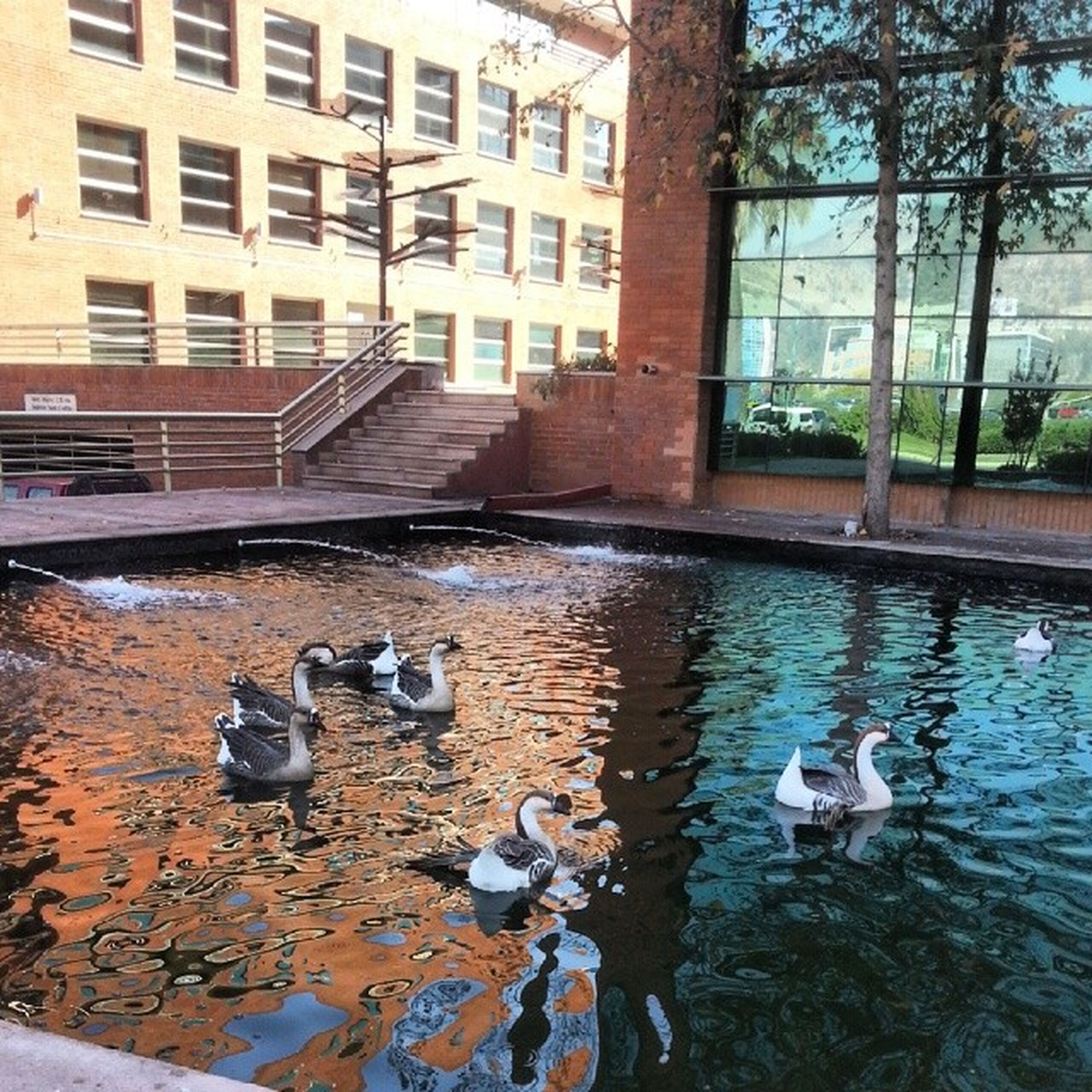 bird, building exterior, built structure, architecture, animal themes, water, animals in the wild, wildlife, city, duck, pigeon, building, reflection, day, outdoors, residential building, canal, perching, tree