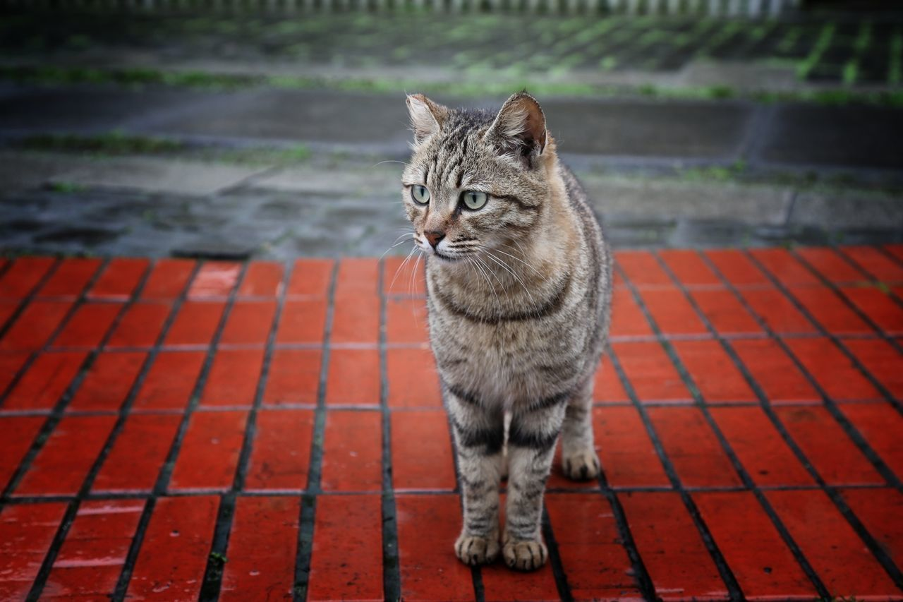 Cat Cats Of EyeEm One Animal Outdoors No People Animal Themes Portrait Animal Feline Mammal Day Cat Watching EyeEm Best Shots 猴硐貓村 City Life On The Way Walking Around The City  EyeEmNewHere Travel Street Beauty In Nature Close-up Colors Landscape Light And Shadows