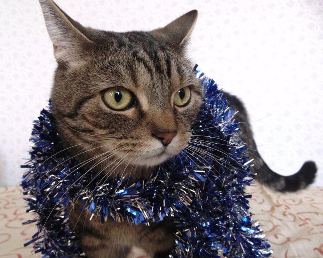 Всех с новым годом! новыйгод 2016 кот глаза  котэ пупсик няша лапа Hapynewyears Cat Eyes MerryChristmas