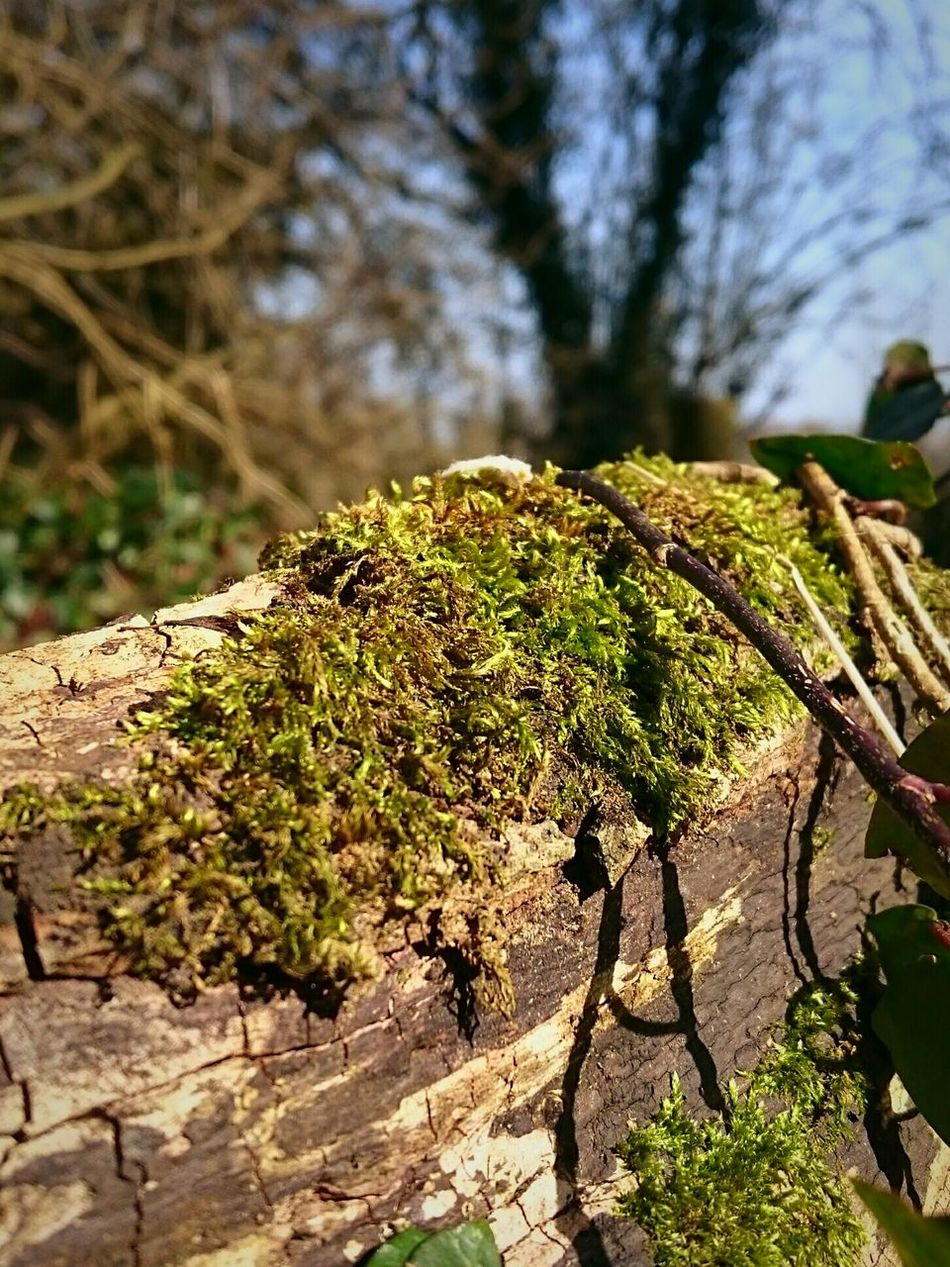 Moss & Lichen Mossy Tree Decaying Wood Ivy Covered Beauty In Nature Nature Photography Focus On Foreground EeYem Best Shots Nature Beautiful Nature Beauty In Ordinary Things Perspective Tree Branches Rotten Wood Mosscovered Eeyem Photography Eeyem Nature Lover Shadows