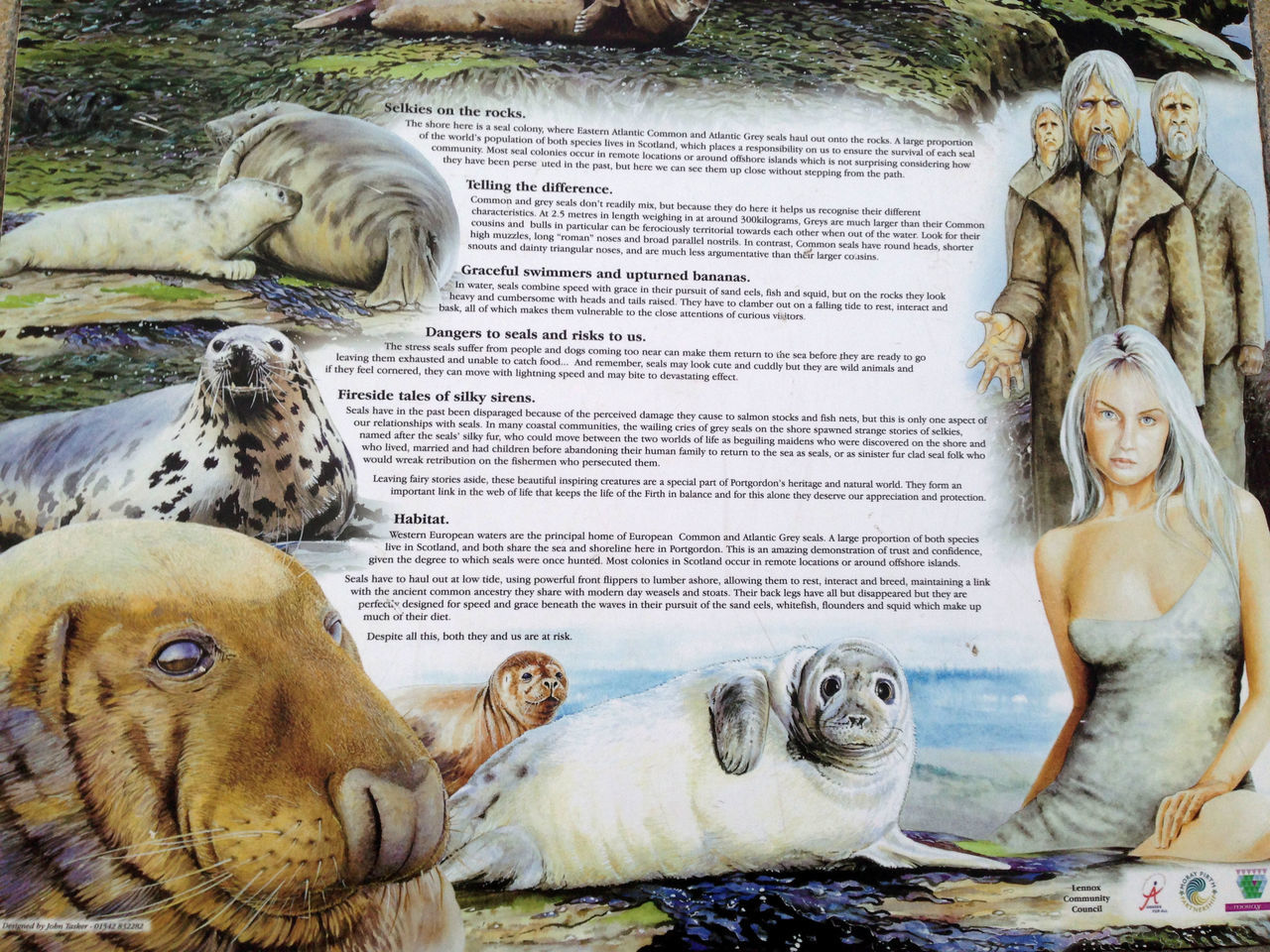 Mammals Mer Morayshire North Ocean S Seascape Selkie
