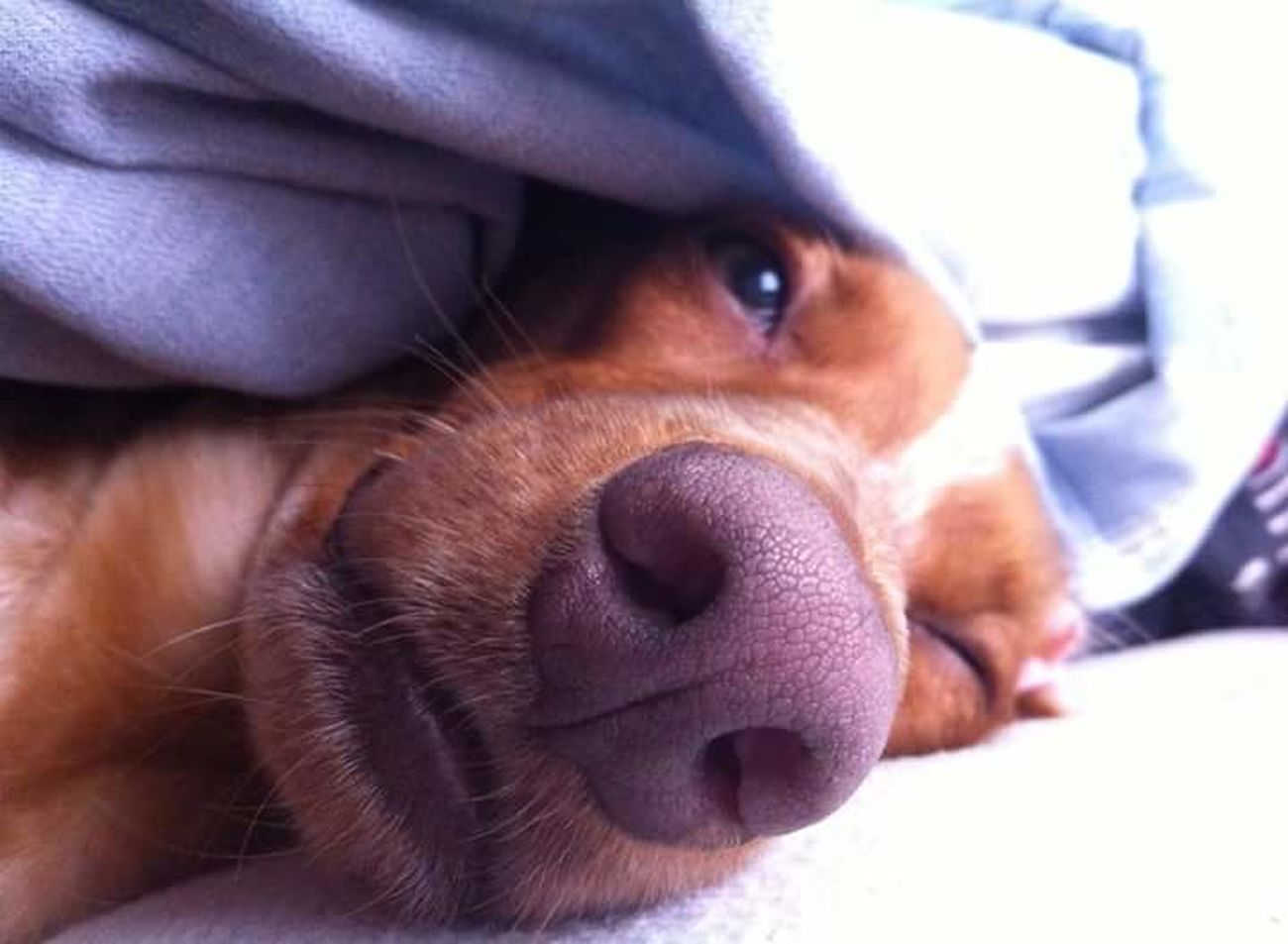 Dogs Dogs Of EyeEm Good Morning EyeEm Best Shots Mornings Lovely Lovely Dog Nouse EyeEm Animal Lover Good Morning! EyeEmBestPics Sleeping Dog