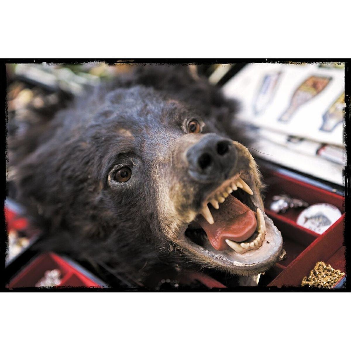 flea market 6 Fleamarket Bear Head Fangs Stuffed Animals