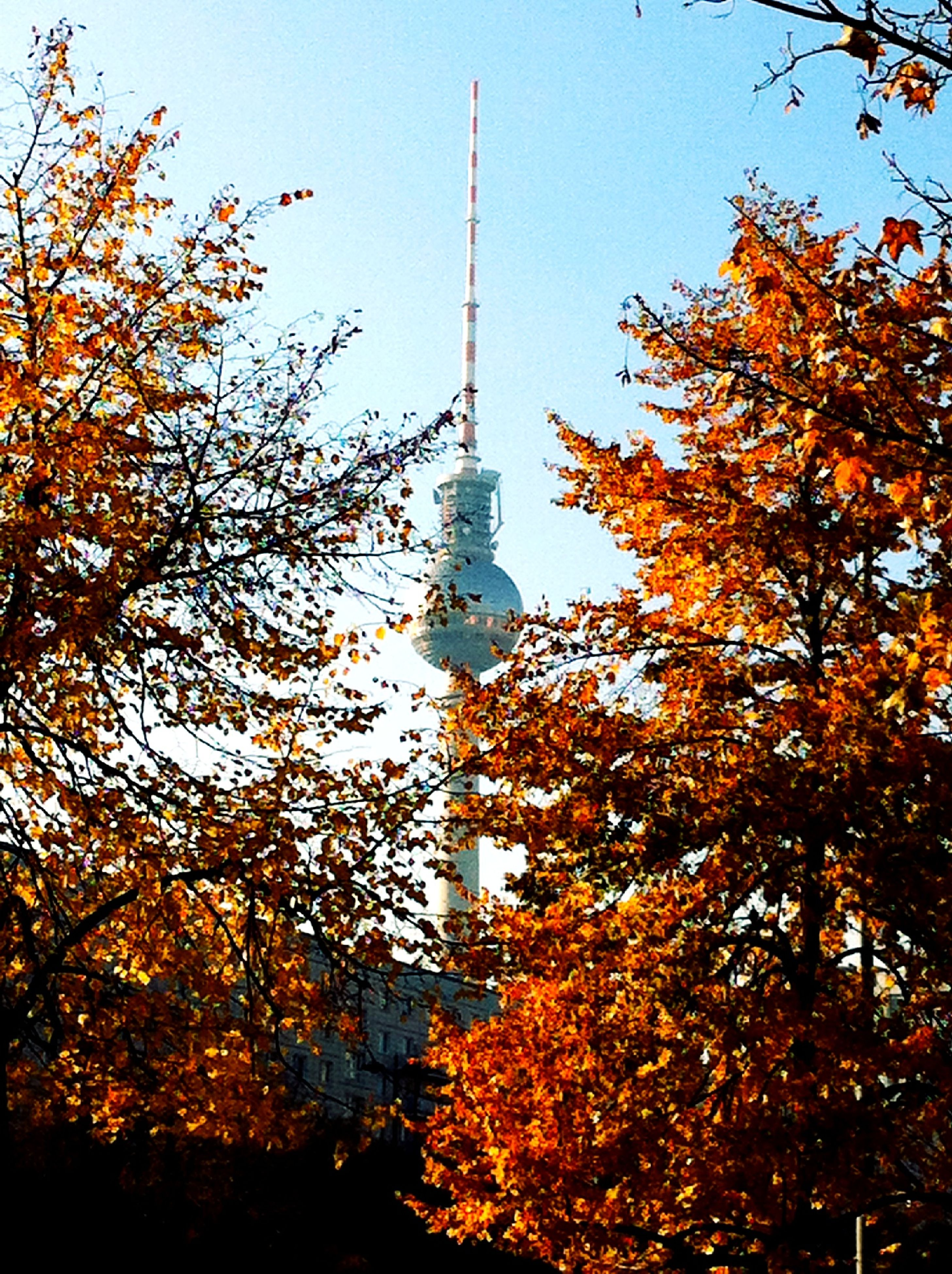 tree, building exterior, tower, architecture, built structure, clear sky, low angle view, tall - high, communications tower, spire, autumn, branch, travel destinations, season, famous place, city, growth, tourism, capital cities, travel