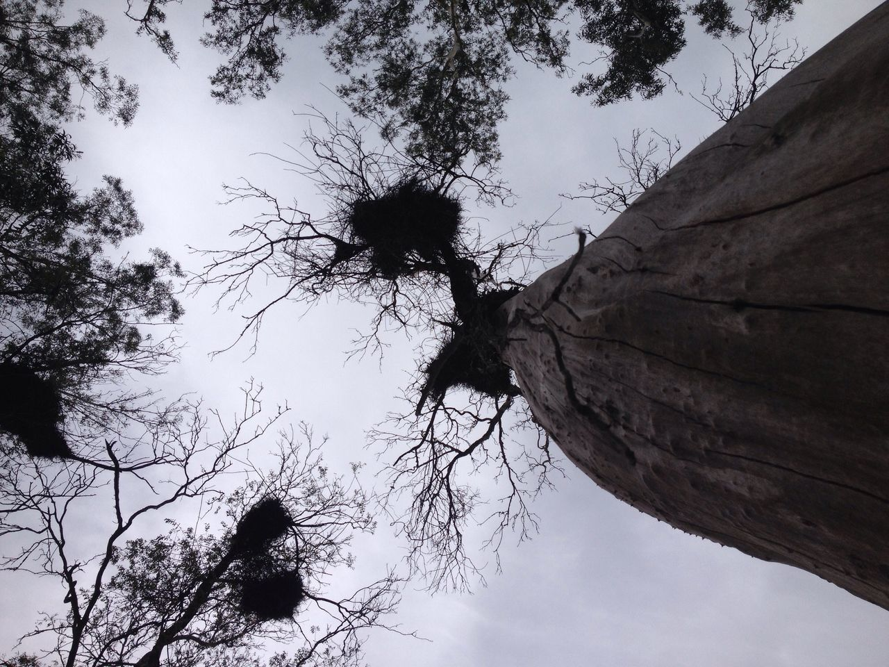 Parque Da Baronesa Low Angle View Tree Saturday Nature Pelotas